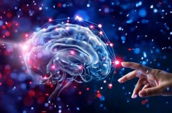 A Importância da Neuroeducação – Saiba Mais Sobre Esta Pós-Graduação