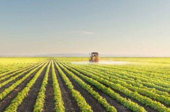 Carreira no Mercado de Agronomia: Saiba Mais Sobre Ele