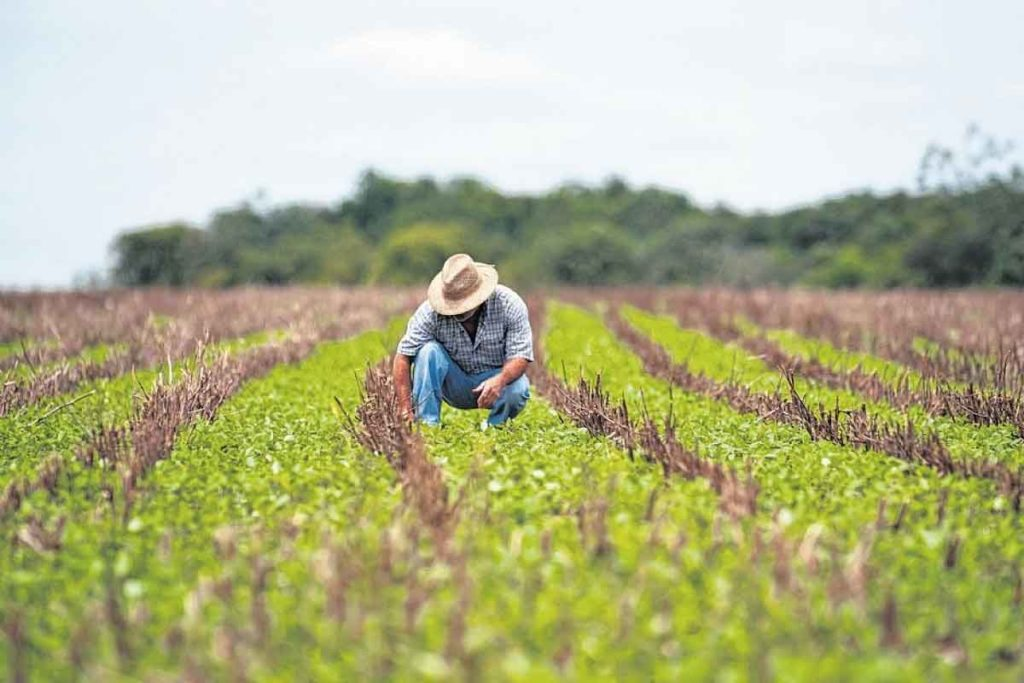 agricultor verificando o plantio