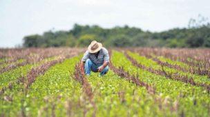 Marketing Para O Produtor Rural: Como Fazer?